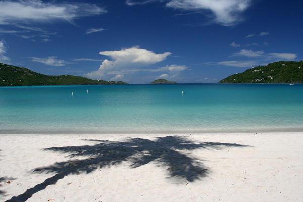 beach_palm